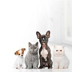 animais-estimacao